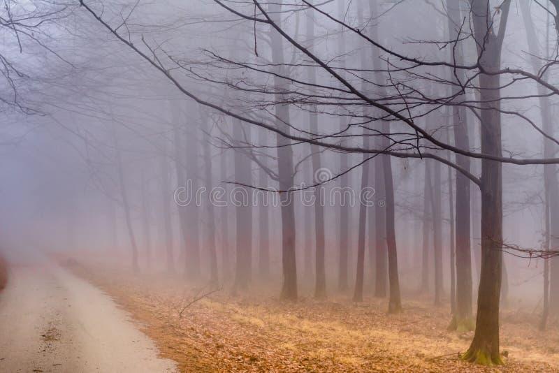 Forest in Czech Rebublic,. Dark and foggy forest near Lelekovice, Czech Republic, Europe stock photos