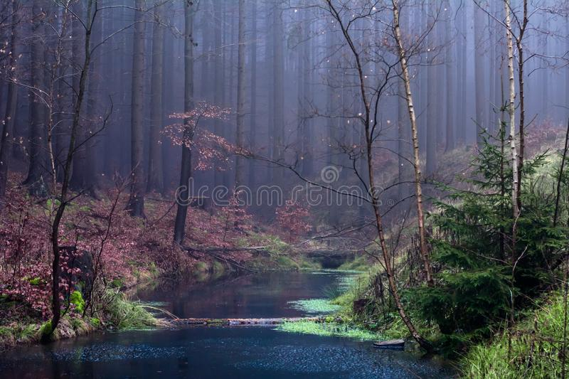 Forest in Czech Rebublic,. Dark and foggy forest near Lelekovice, Czech Republic, Europe stock image