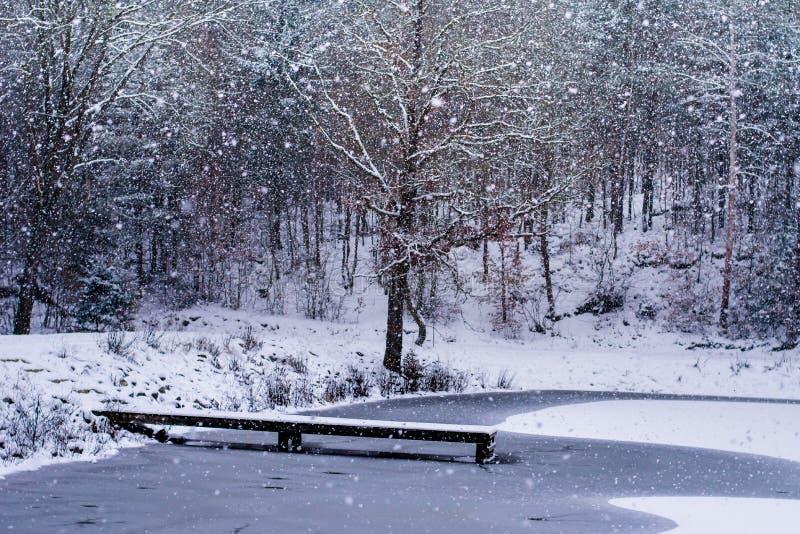 Forest in Czech Rebublic,. Snowy forest near Lelekovice, Czech Republic, Europe royalty free stock photo