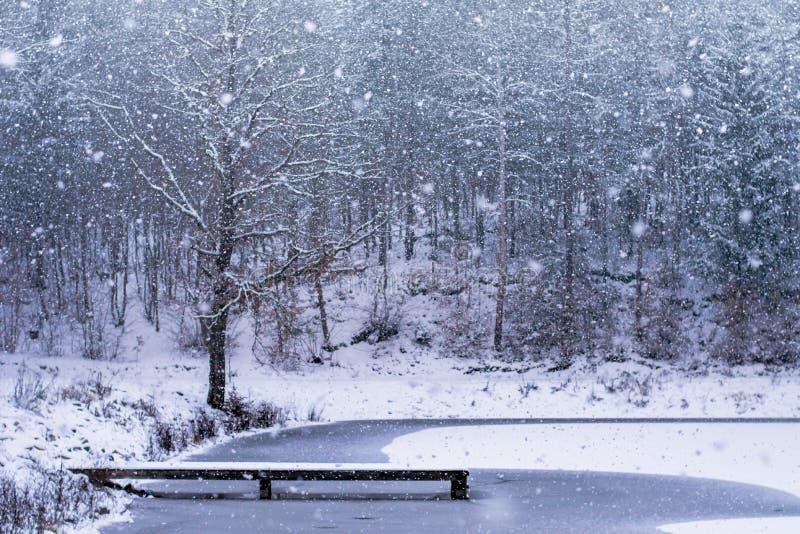 Forest in Czech Rebublic,. Snowy forest near Lelekovice, Czech Republic, Europe royalty free stock photos