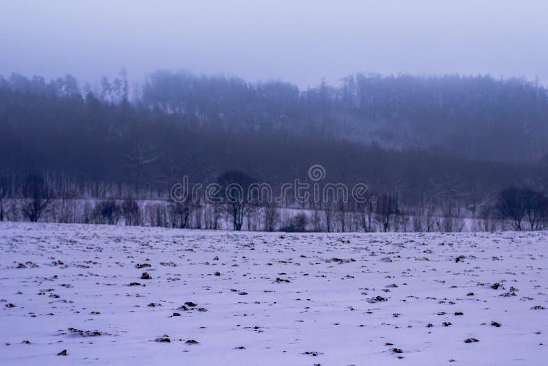 Forest in Czech Rebublic,. Snowy forest near Lelekovice, Czech Republic, Europe stock photo