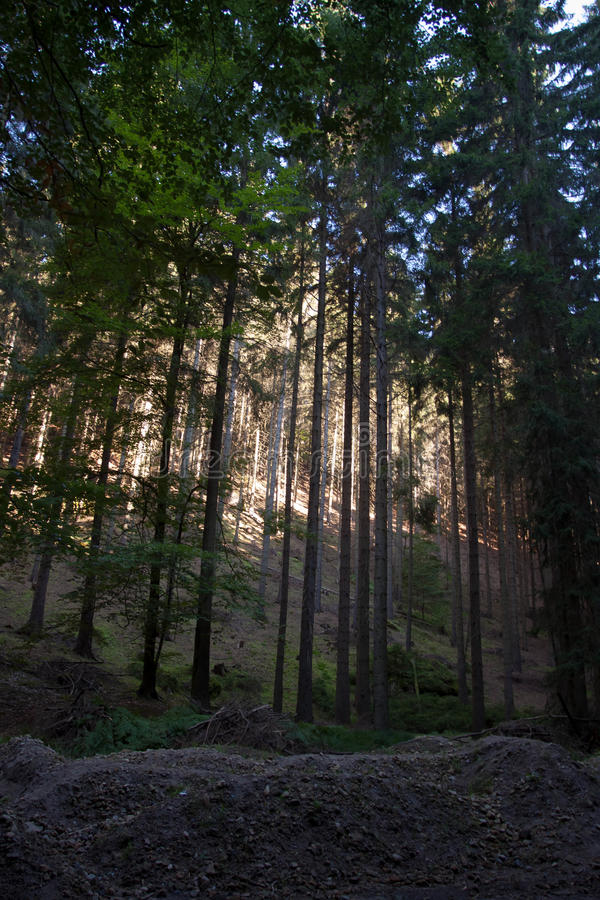 Forest in Czech Switzerland stock photography