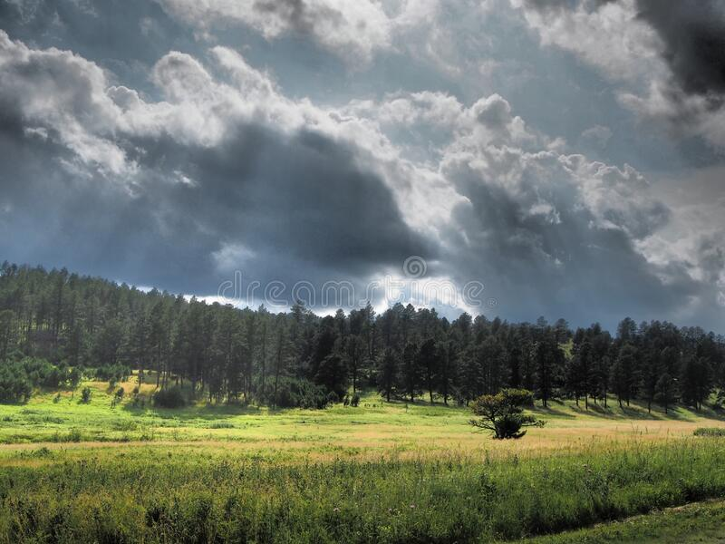 Forest with dark clouds royalty free stock image