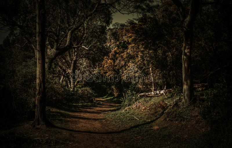 Forest dark gloomy and scary stock photography