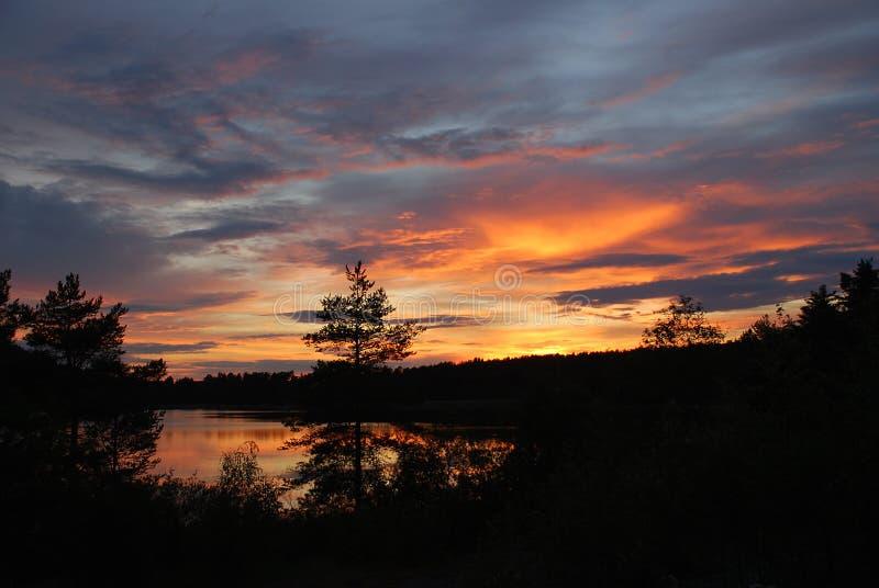 Forest on dark orange clouds background stock photos