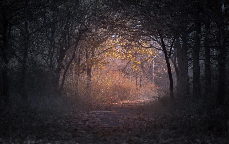 Forest During Dawn Free Public Domain Cc0 Image