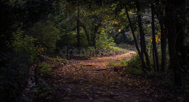 Forest during Daytime stock image
