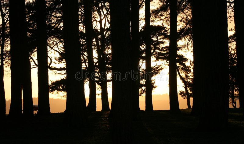 Forest of Dean Evening royalty free stock photography