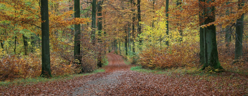 Forest in denmark stock image