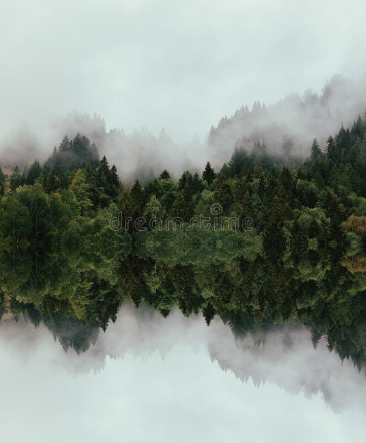 Forest with dense fog in the morning stock photos