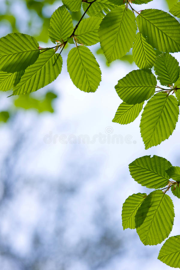 Free Forest Detail Stock Image - 14453661
