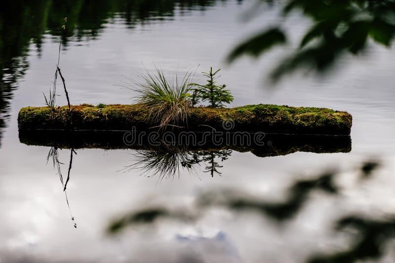Forest Detail lizenzfreies stockfoto