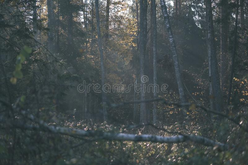 Forest details in late autumn at countryside with tree trunks, colored leaves and empty branches in sunny fall day. ground covered. In yellow leaves - vintage stock photo