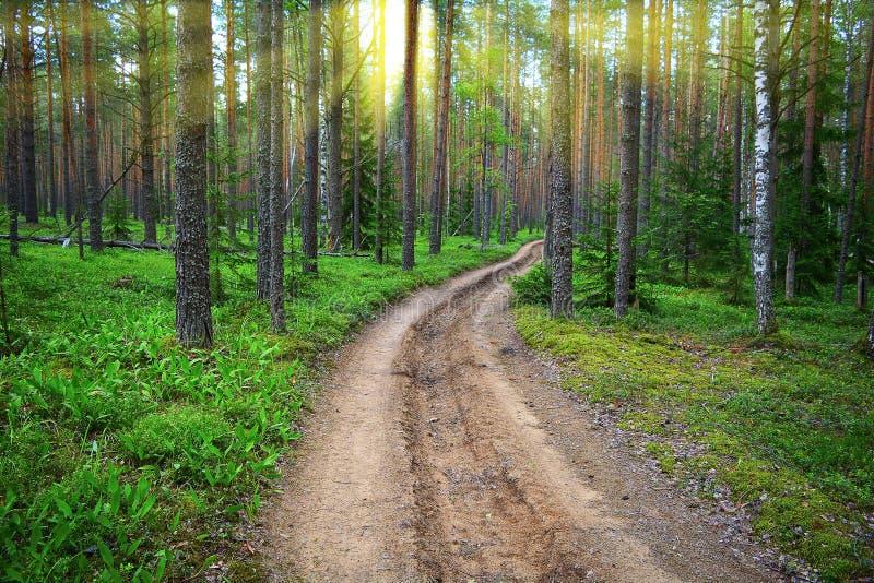 Forest Dirt Road Les rayons lumineux du soleil brillent par les pins photographie stock libre de droits