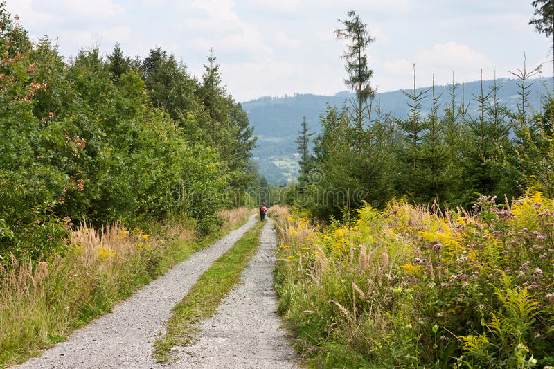 Forest dirt road with walking tourists in Moravian-Silesian region in the Czechs republic stock photography
