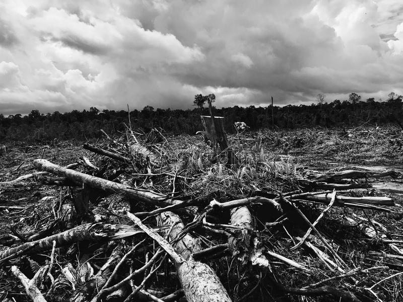 Forest distruction royalty free stock images