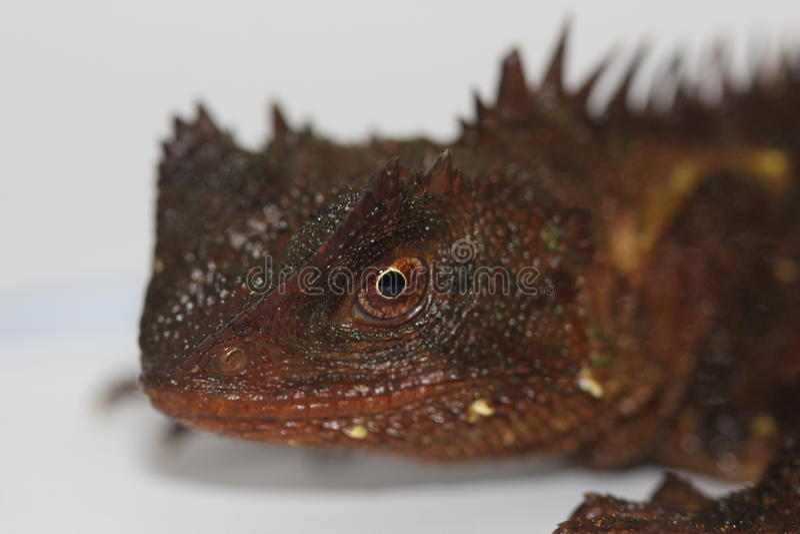 Forest Dragon à cornes image stock