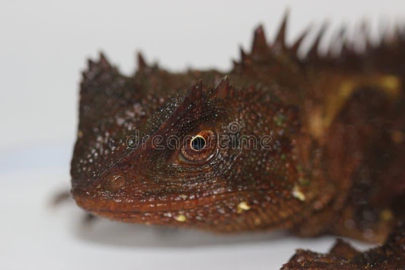 Forest Dragon Horned imagem de stock