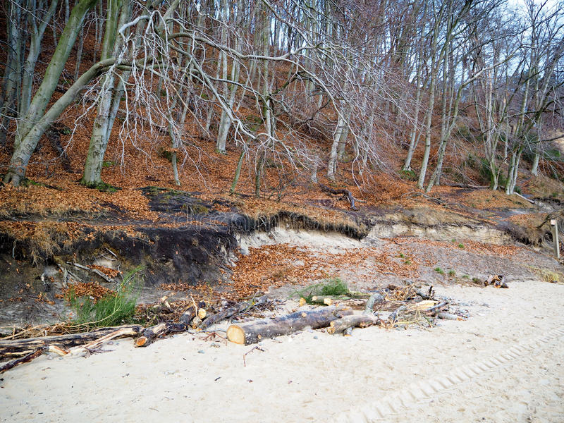 Download Forest And Driftwood White Sand On The Shore Stock Photo - Image: 83705490