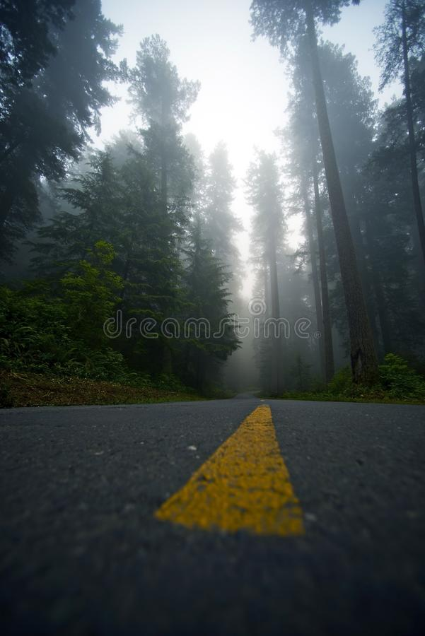 Forest Drive nevoento imagens de stock