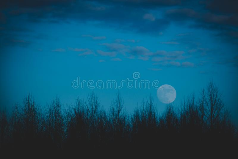 Forest at dusk and full moon stock photo