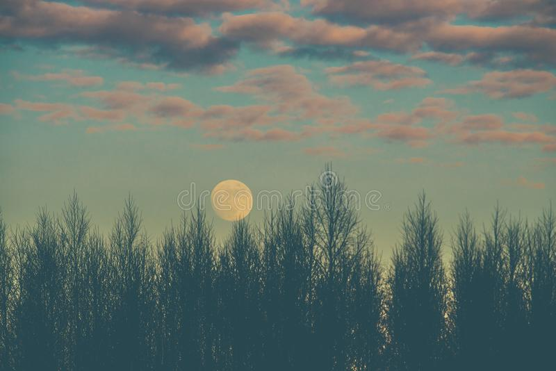 Forest at dusk and full moon stock photography