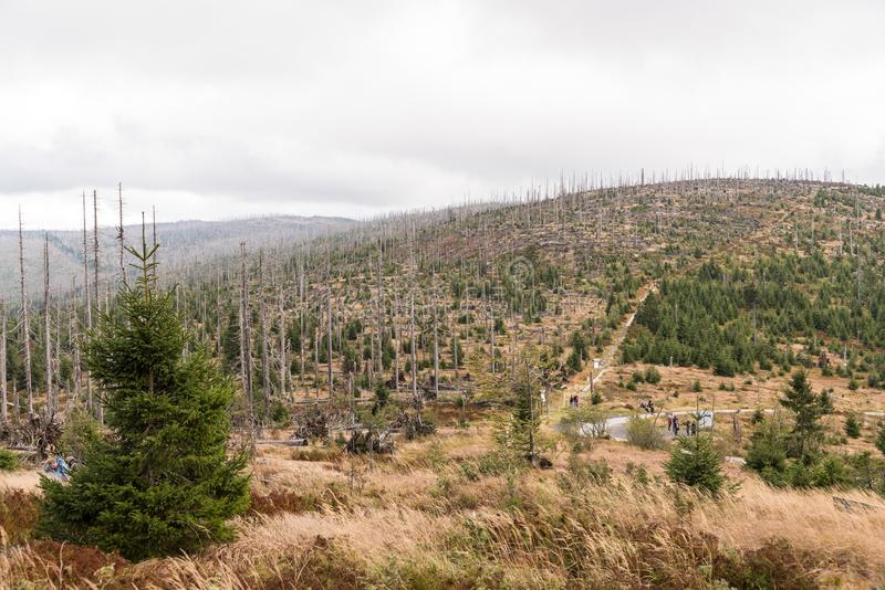 Forest dying on Dreisesselberg stock photo