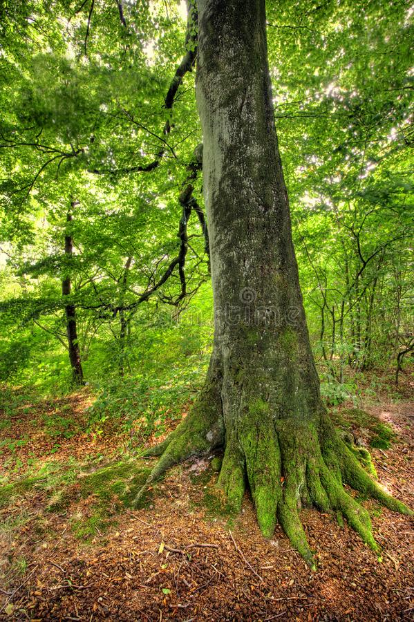 Forest in early autumn stock photography