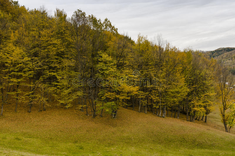 Forest in early fall royalty free stock photos