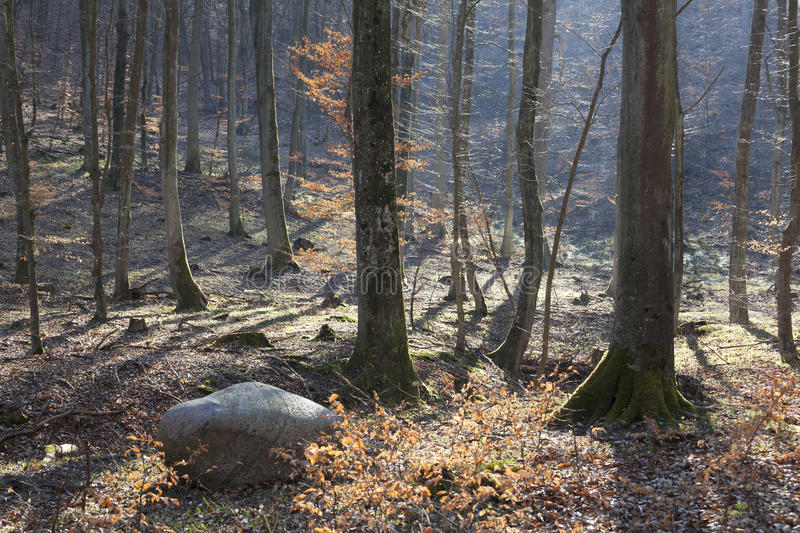 Forest In Early Spring Stock Photo