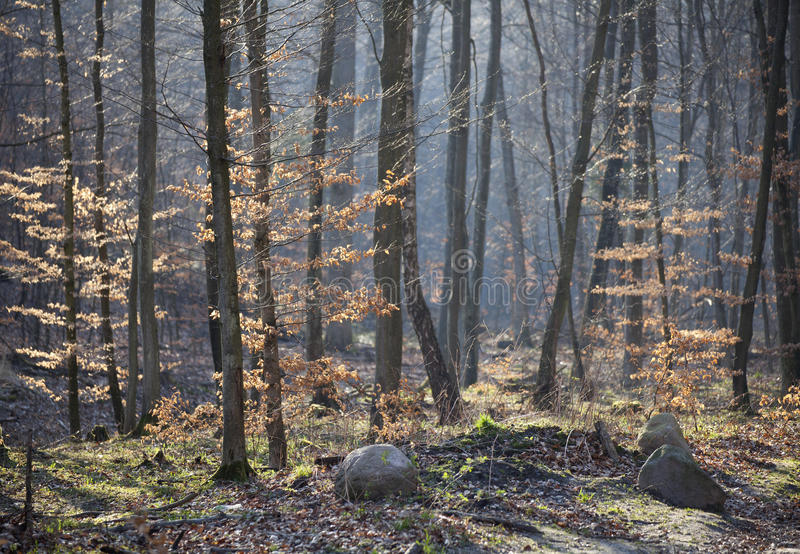 Download Forest in early spring stock image. Image of scene, botany - 39337339