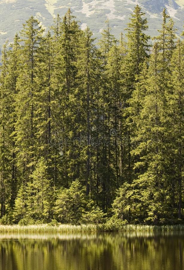 Forest edge stock photography