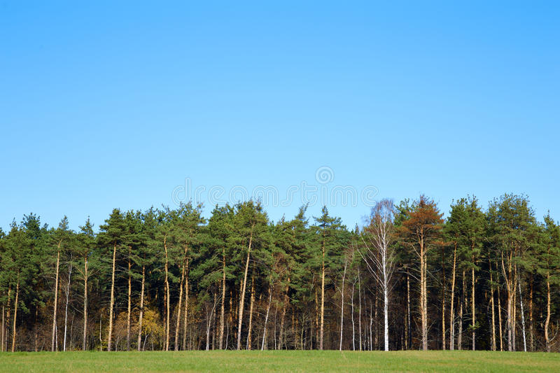 Forest edge royalty free stock photos