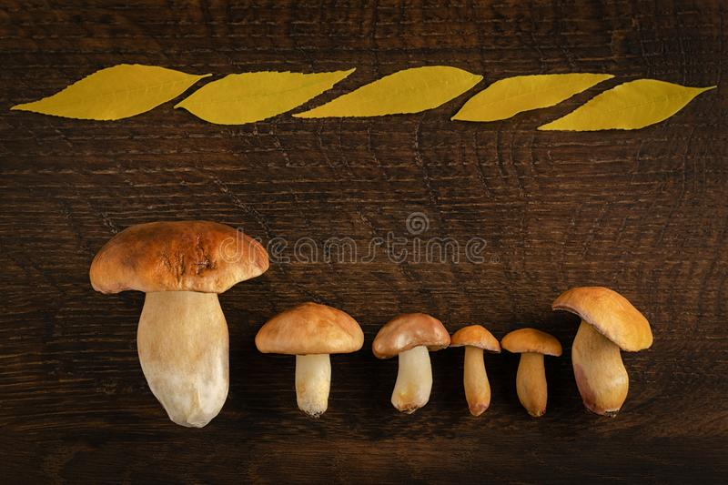 Forest edible mushrooms on a wooden table and space for text royalty free stock photography