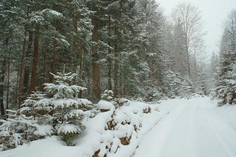 Forest and empty road with deep snow covered stock photos