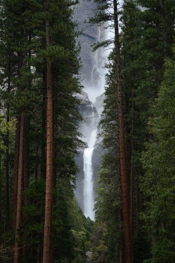 Forest Enchantment fotografie stock
