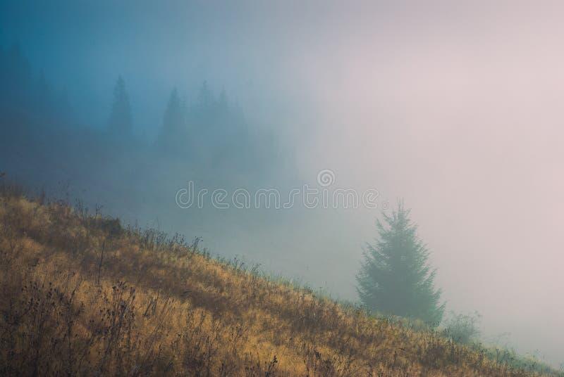 Forest_1 enevoado Carpathian fotografia de stock