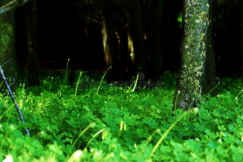 Forest Entrance oscuro fotos de archivo