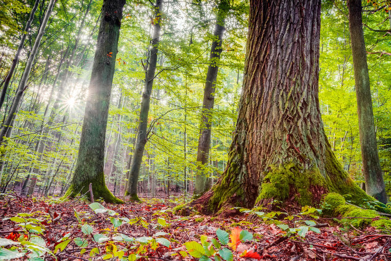 Forest In Europe In Late September Stock Images