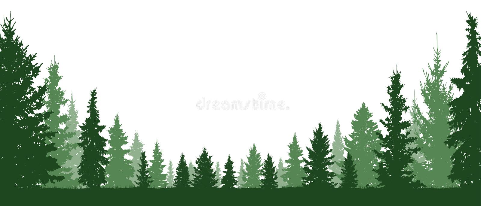 Forest evergreen, coniferous trees, silhouette vector background. vector illustration