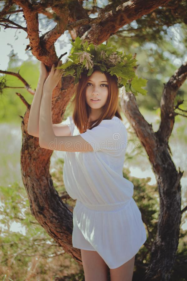 Forest Fairy fotografie stock
