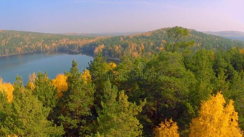 Forest in the fall lake in autumn view from the sky. Lake reflections of fall foliage. Aerial Colorful autumn foliage royalty free stock images