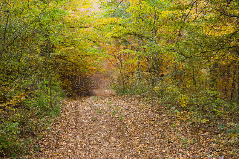 Forest at fall season royalty free stock images