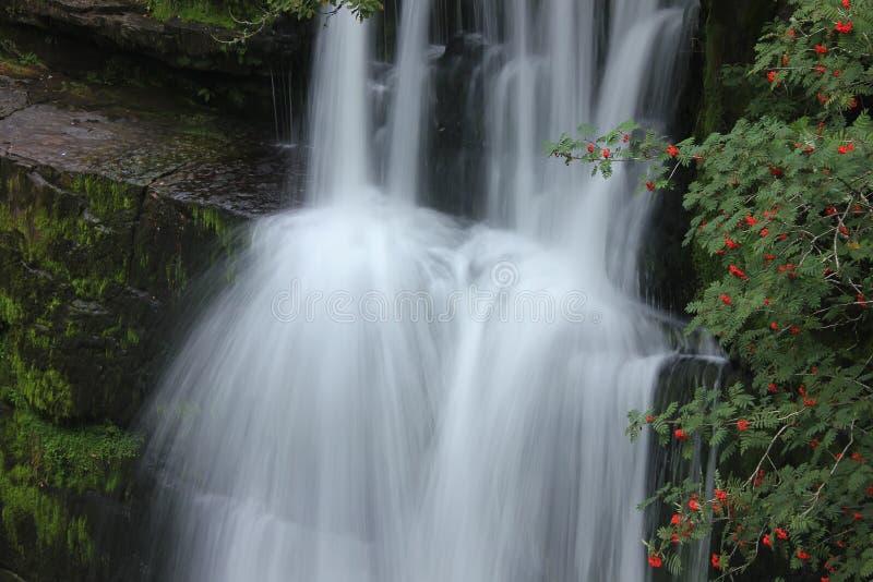 Forest Falls, het Verenigd Koninkrijk, Engeland stock fotografie