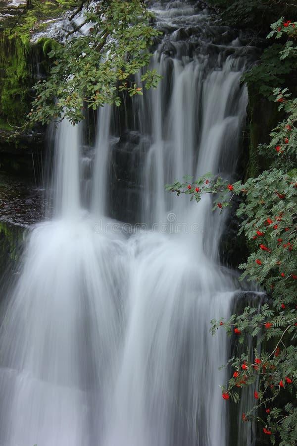 Forest Falls, het Verenigd Koninkrijk, Engeland stock afbeeldingen