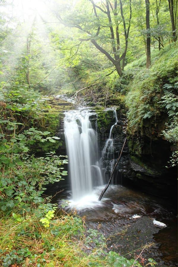 Forest Falls, het Verenigd Koninkrijk, Engeland stock foto