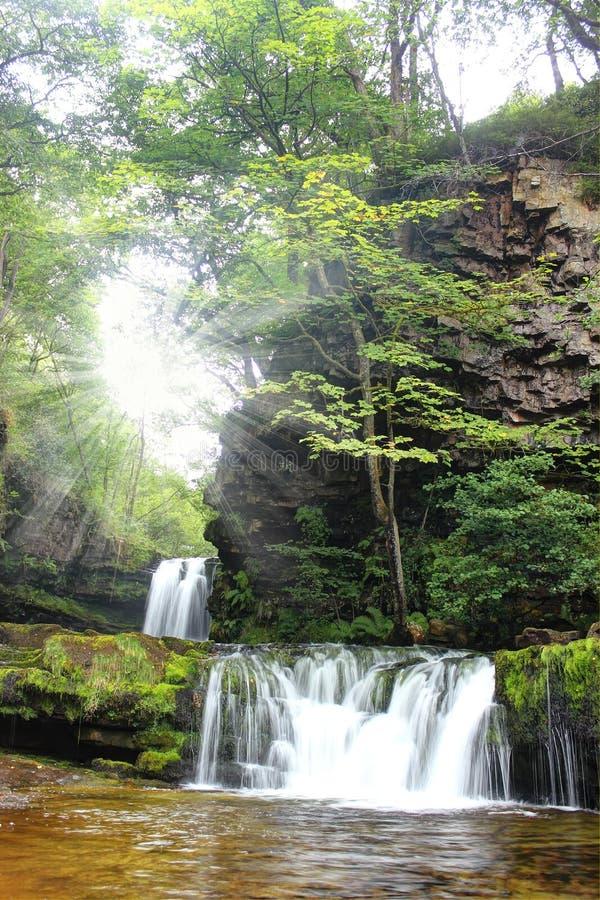 Forest Falls, het Verenigd Koninkrijk, Engeland stock afbeelding