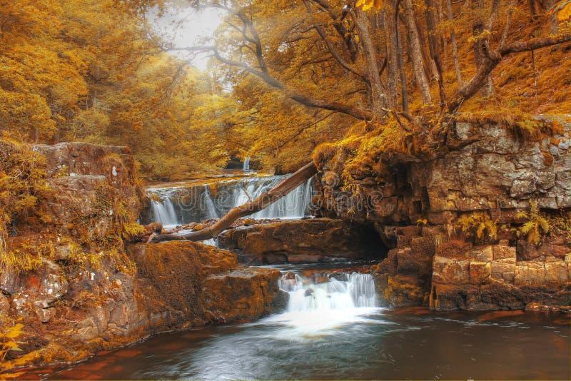Forest Falls, het Verenigd Koninkrijk, Engeland royalty-vrije stock foto
