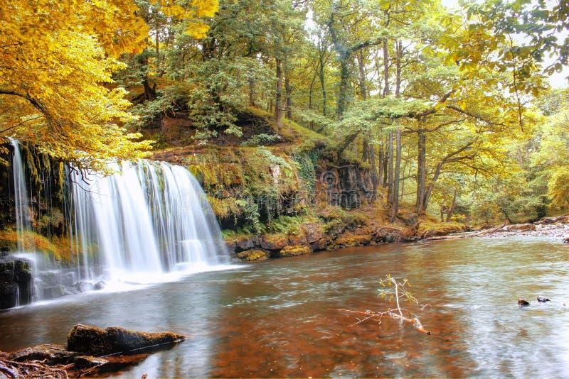 Forest Falls, het Verenigd Koninkrijk, Engeland royalty-vrije stock afbeeldingen