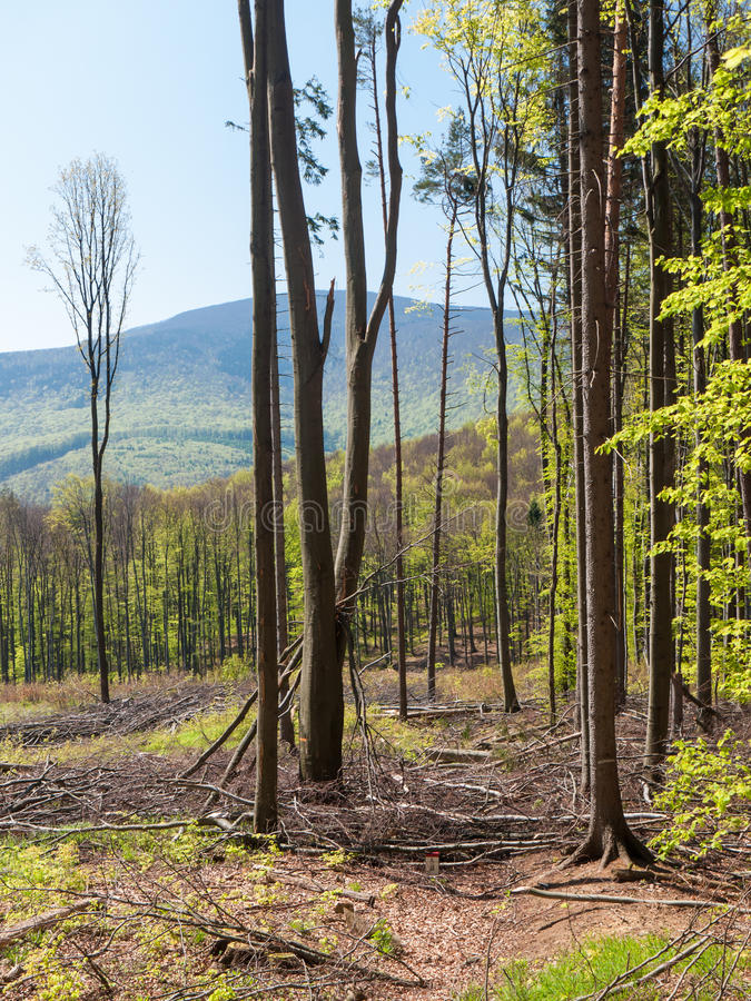 Download After forest felling stock image. Image of conservation - 41878263